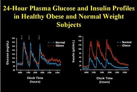 24 hr insulin obese
